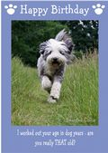 "Bearded Collie-Happy Birthday - ""Are You Really THAT Old"" Theme"